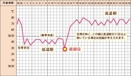 妊娠(超)初期の基礎体温の特徴とグラフ!高温期が2週間以上続いたら…