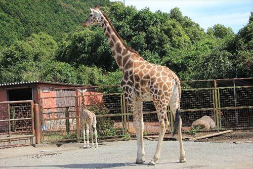 【12】動物園に行ってもOK?