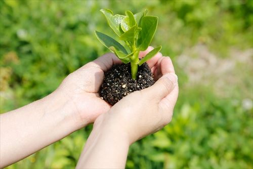 【5】ガーデニングや家庭菜園をしても大丈夫?