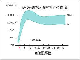 HCGホルモン