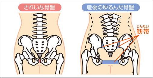 通常時の骨盤と、産後の骨盤