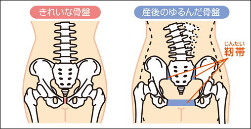 骨盤(こつばん)
