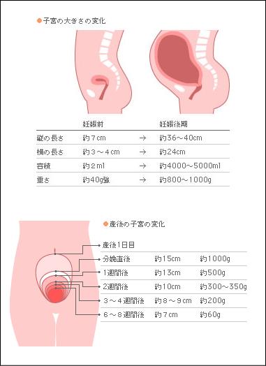 子宮復古(しきゅうふっこ)
