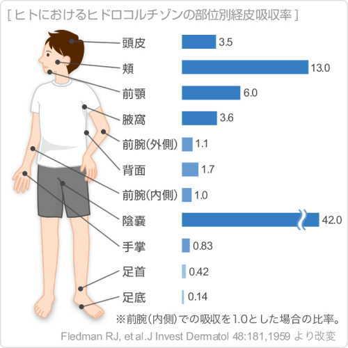 経皮毒と吸収率。身体の部位ごとの経皮吸収率を知ろう!