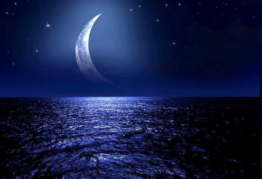 満月や新月の日は出産が増えるって本当?理由は?他の動物はどうなの?